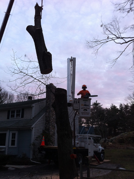 tree removal norfolk wrentham franklin ma