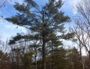 Tree Company norfolk wrentham franklin ma
