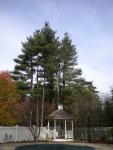 tree-pruning-services-norfolk-franklin-wrentham-ma