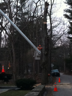 tree-removal-cutting-norfolk-franklin-wrentham-ma