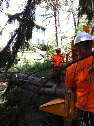 tree-trimming-norfolk-wrentham-franklin-ma