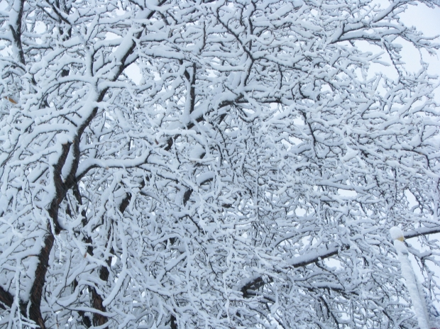Image result for winter tree