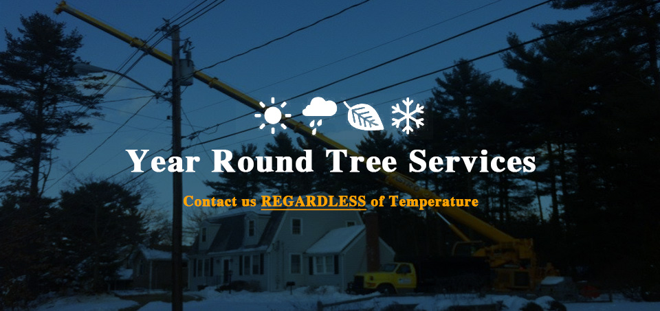 Year-Round-Tree-Services